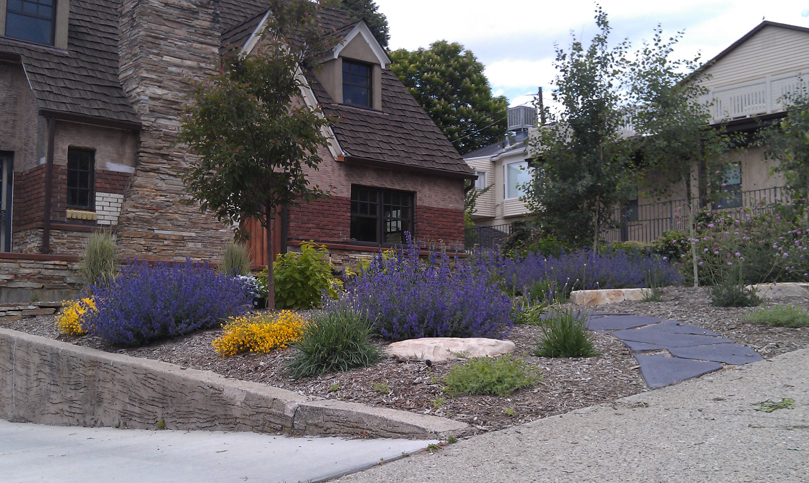Mcmillan eco design natural edible and water wise - Drought tolerant landscape design ...
